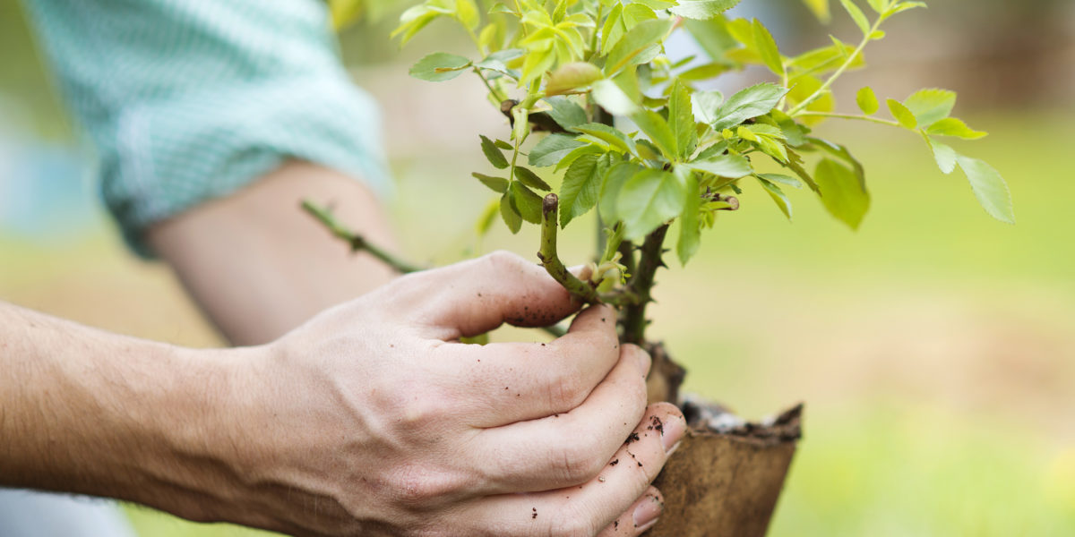 Planting trees can save on energy costs